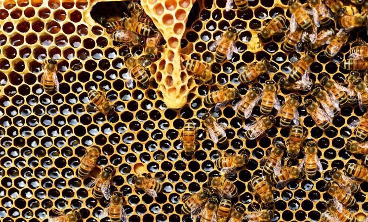 AfD freut sich über die Anpflanzung von Bienenbäumen