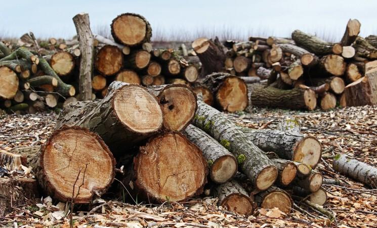Energiewende lässt den Wald verschwinden